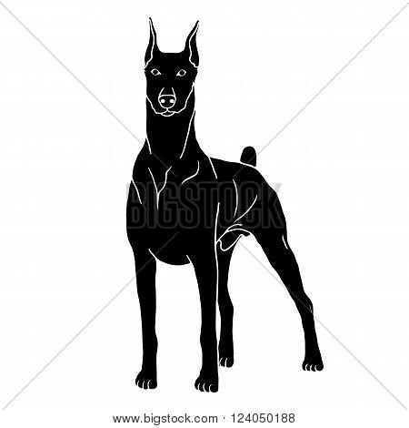 Doberman dog isolated realistic vector illustration black silhouette  pet