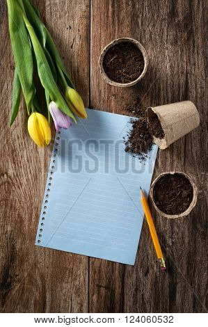Closeup of peat planting pots filled with soil and tulips with sheet of blank paper on rustic wooden background. Gardening and planting seedlings spring is here concept. Copyspace.