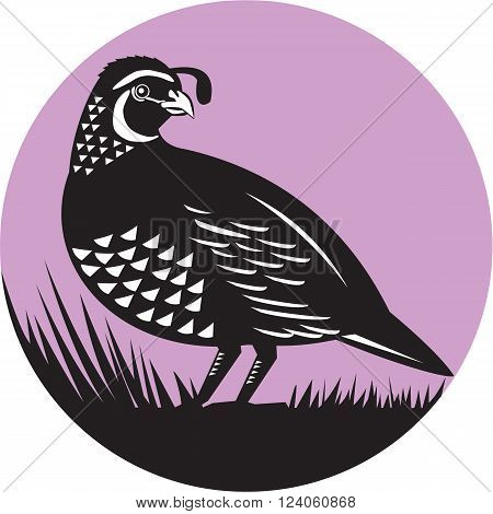 Illustration of a California valley quail bird looking to side set inside circle done in retro style.
