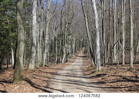 A road through the wood in spring.  Sleeping Bear Dunes National Lakeshore