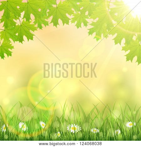 Spring nature background with flowers in the grass, maple leaves and Sun, illustration.