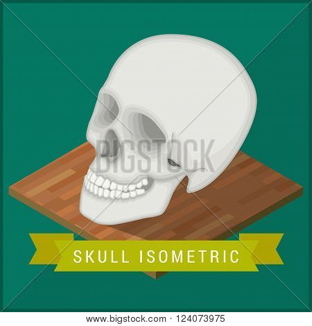 Human skull flat isometric icon. Cranium educational model vector illustration. Human anatomy symbol for medicine and science. Head biology pictogram concept. Medical model flat isometric vector sign.