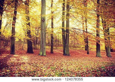 Autumnal trees inside forest. Woodland fall scenery. Nature vegetation season concept.