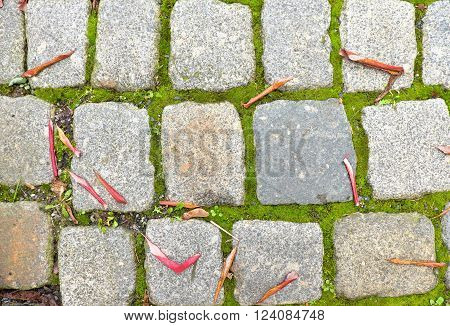 Cobblestone paving footpath with autumn dry colorful leaves, granite cobbles