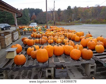 Colorful orange pumpkins in a roadside market during Halloween