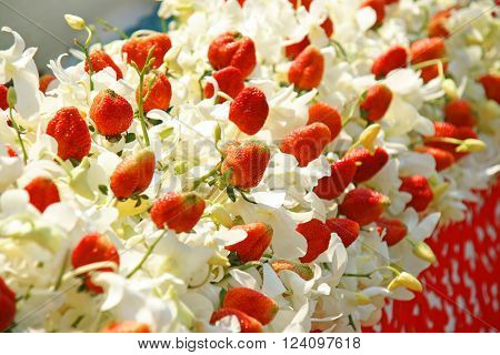 White Orchid Flowers Arranged With Fresh Strawberry For Decoration Concept