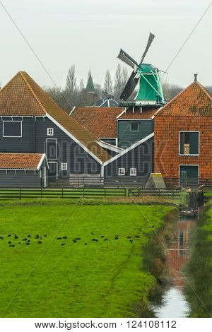 Country landscape with grazing coot bird flock at traditional Dutch windmill and wooden farm house background