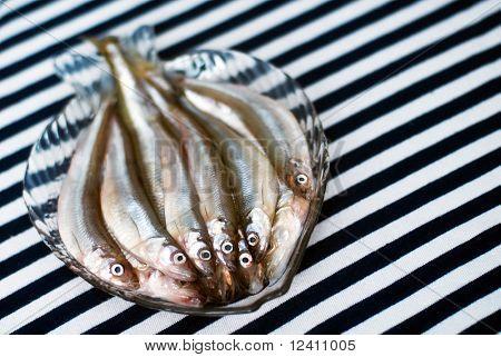 Famous fresh Baltic fish smelt or korjushka over striped seaman fabric