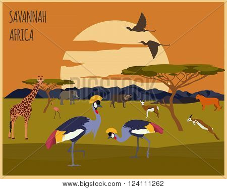 Graphic template. Landscape. Savannah. Africa. Vector illustration