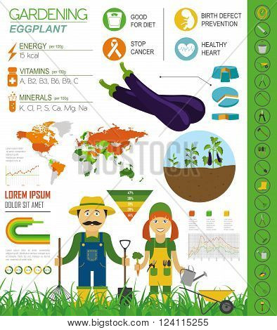 Gardening work, farming infographic. Eggplant. Graphic template. Flat style design. Vector illustration