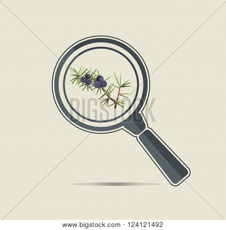 Juniper under a magnifiyng glass. Botanical research conceptual icon.