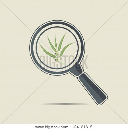 Eucaliptus under a magnifiyng glass. Botanical research conceptual icon.
