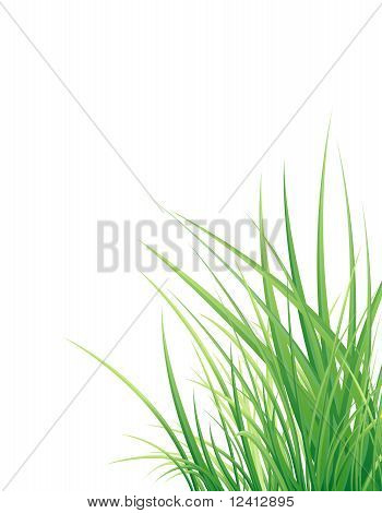Vertical Vector Background With The Grass