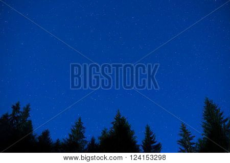 Dark Blue Night Pine Trees Over Sky