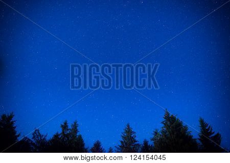 Dark blue night pine trees over sky with many stars. Milky way background