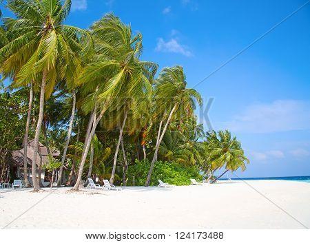 Maldivian island. Paradise in tropics.