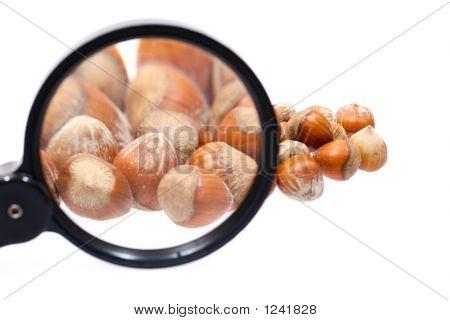 Little Hazelnuts