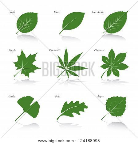 Set of Green Leafs. Vector Illustration and Icons.