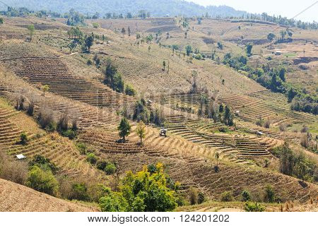 Barren terraced rice field in northern Thailand because of arid climate and dry season