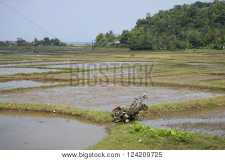 Flooded rice fields in the vicinity of Hue. Vietnam