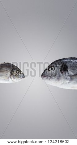 Two Fresh Sea Breams, Wild And River, Big And Small, In Front Of Each Other Ready To Fight And Debat