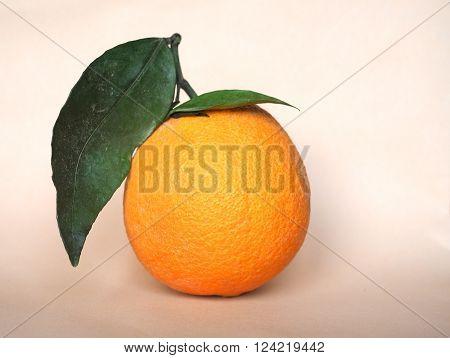 Orange Fruit (citrus)