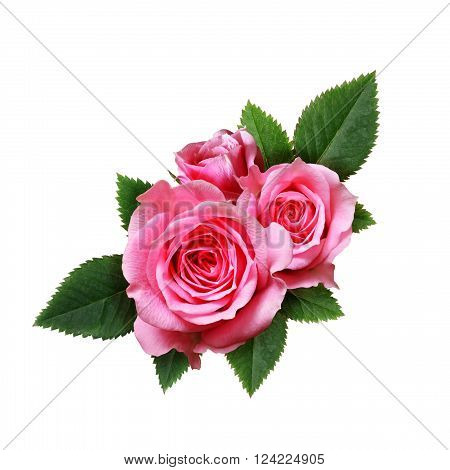 Pink rose flowers composition isolated on white