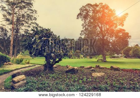 Nuwara Eliya, Sri Lanka. Queen Victoria Park in warm, sunny colors. Victoria Park is located in the heart of the alpine resort of Nuwara Eliya - the