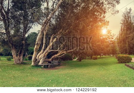 Nuwara Eliya, Sri Lanka. Queen Victoria Park at sunset. Victoria Park is located in the heart of the alpine resort of Nuwara Eliya - the