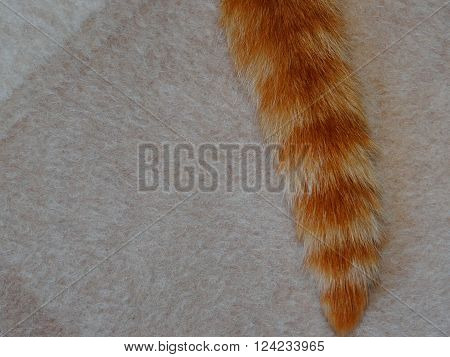 beige natural wool fabric from sheep's wool which has a red tail cat
