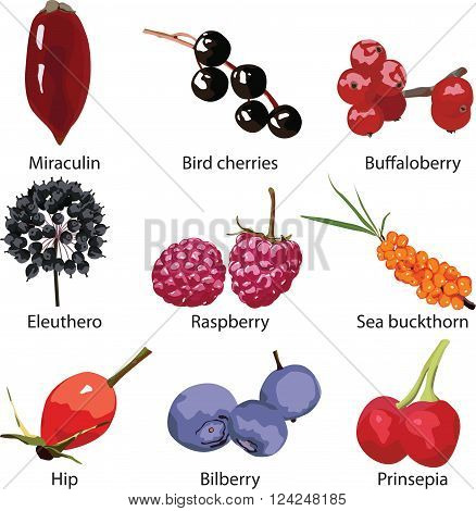 9 different berries on a white background