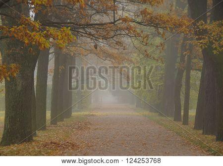 Misty autumn morning in Alexandrovsky Park in Tsarskoye Selo ** Note: Visible grain at 100%, best at smaller sizes