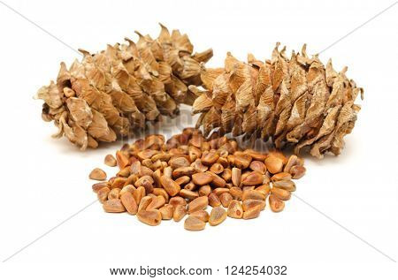cedar cones and seeds on white background