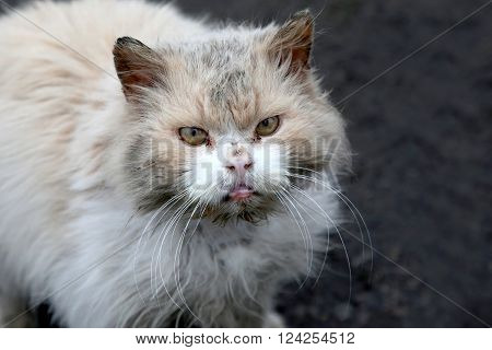 there's a dirty homeless street grumpy cat