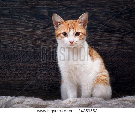 Cat on a background of a wooden wall. Portrait of a beautiful cat. yellow eyes