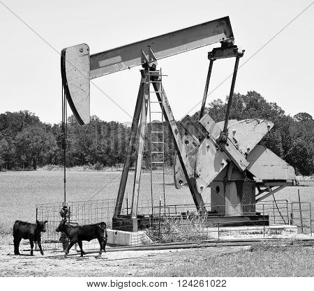 Oil well pumper in West Texas with cattle..