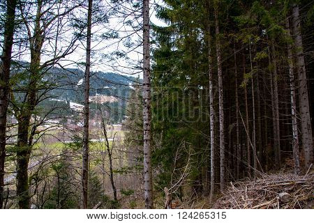 Forest ladscape in the evening in eraly spring in bavaria
