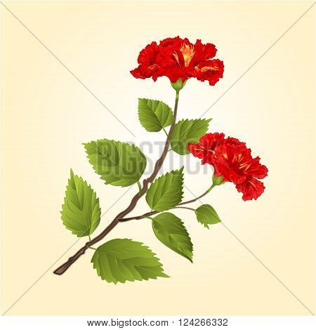 Red hibiscus stem tropical flower vector illustration