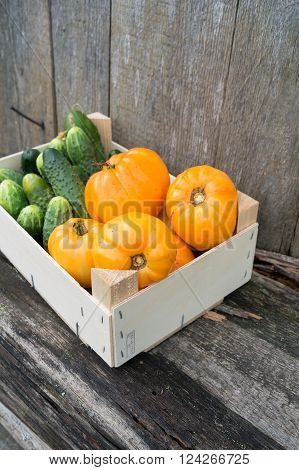 Fresh eco yellow tomatoes and cucumbers in wooden box in the garden