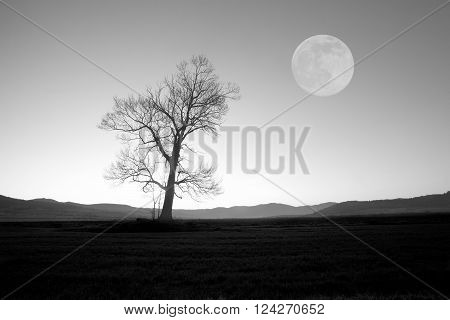 full moon over the oak tree abstract black and white background