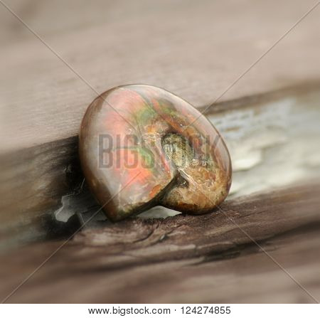 Fossilized shell of ammonite on a wooden background