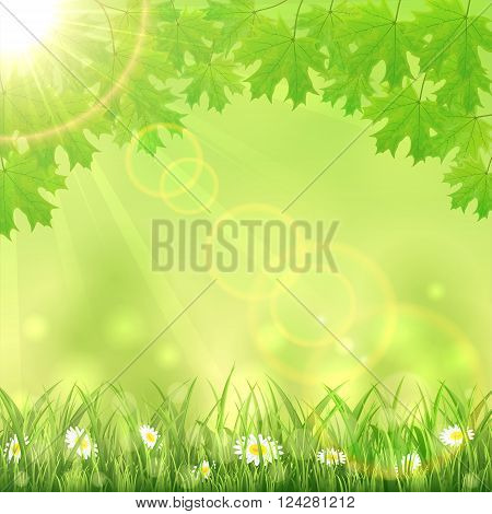 Summer green nature background with flowers in the grass, maple leaves and Sun, illustration.