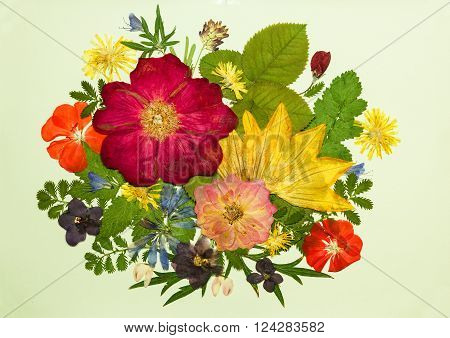 Bouquet of flowers on a light background. Pressed dried rosehip flowers pumpkin geranium violet dandelion clover and lupine. Picture from dry flowers.