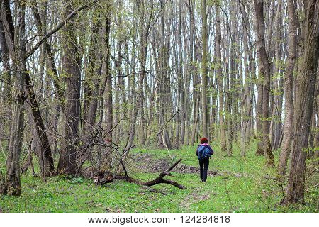 Woman with backpack hiking into a hornbeam forest