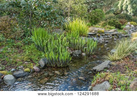 Plants grow in Spring beside a babbling brook in Seatac Washington.