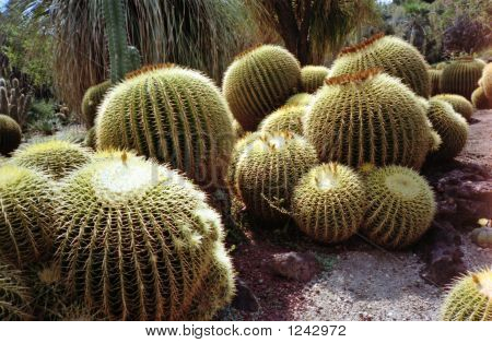 Cactus Group 01