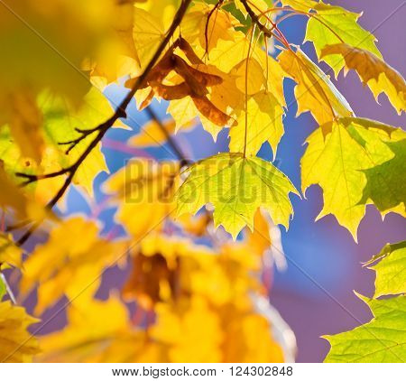 Background With Yellow And Orange Autumn Leaves