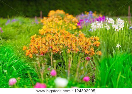 Lush Flowerbeds In The Garden
