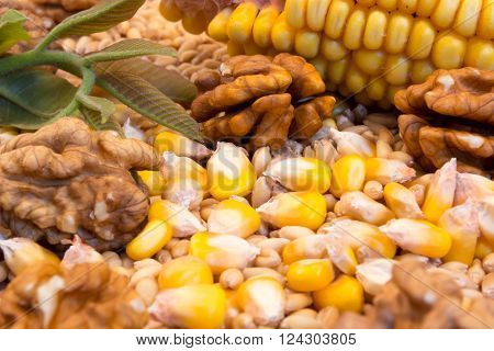 Corn cob wheat nuts on the wooden plate with green nut leaves
