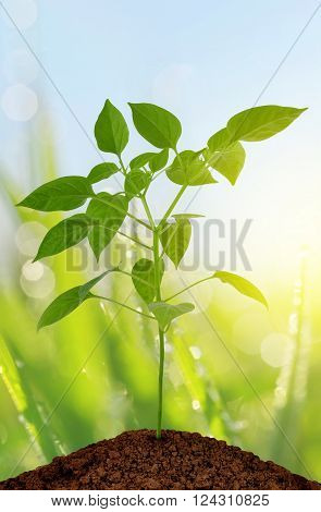 Young plant growing from soil. New life concept.